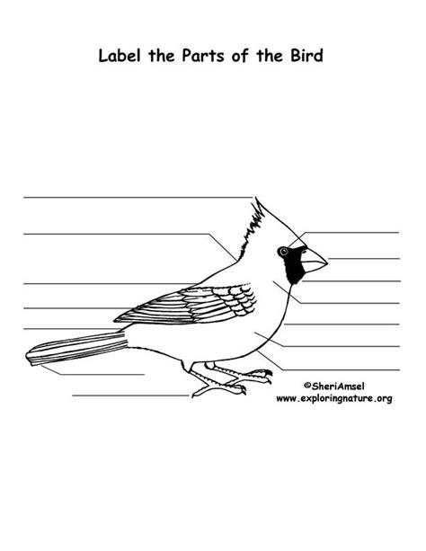bird traits lecture activity  quiz
