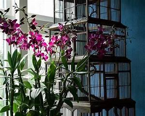 Rempoter Une Orchidee : entretien des plantes d int rieur quand et comment ~ Mglfilm.com Idées de Décoration
