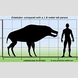 Prehistoric Predators Bear Dog | 500 x 294 jpeg 24kB