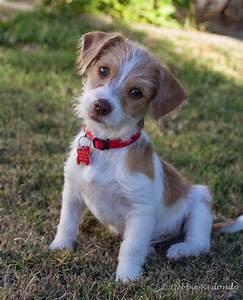 arsis al org gzim plugins content small dogs for adoption 5413 JPG