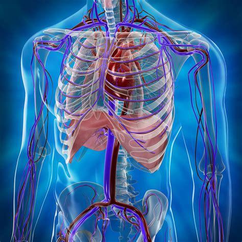 scanner image  cardiovascular system