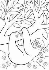 Sloth Faultier Perezosa Coloritura Bradipo Pigro Pagine Sull Boyama Tembel Hayvan Colorante Pereza Páginas şirin Faulen sketch template