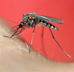 Was Vertreibt Mücken : antibrumm co wie man fiese m cken vertreibt welt ~ Whattoseeinmadrid.com Haus und Dekorationen