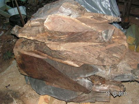 huge lot black walnut stump lumber wood fantastic figure