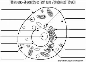 Animal Cell Label