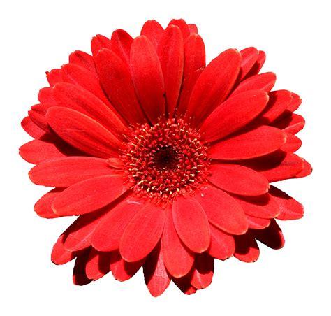 Red Flowers  Fake Flower Arrangements Fake Flower