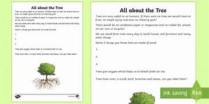 All About The Tree Read And Draw Worksheet    Worksheet