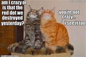 30 Funny animal captions - part 22 (30 pics) | Amazing ...