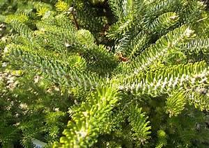 Ab Wann Hecken Schneiden : wann koniferen schneiden wann tuja schneiden thuja smaragd schneiden thuja brabant schneiden ~ Eleganceandgraceweddings.com Haus und Dekorationen