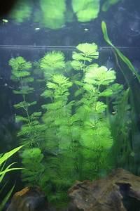 Pflanzen Bestimmen Nach Bildern : untere und alte bl tter fallen ab aquarium forum ~ Eleganceandgraceweddings.com Haus und Dekorationen