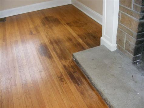 hardwood flooring and dogs how to clean pet urine from wood floors puppy corner pinterest stains pets and hardwood