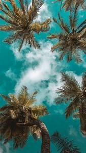 Cute, Computer, Backgrounds, Tall, Palm, Trees, Blue, Sky, White, Clouds