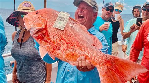 snapper florida fishing today height