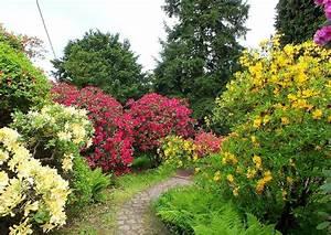 Welche Pflanzen Passen Gut Zu Hortensien : rhododendrongarten anlegen gestaltungstipps ~ Lizthompson.info Haus und Dekorationen