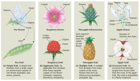morphology  flowering plants emedicalprep