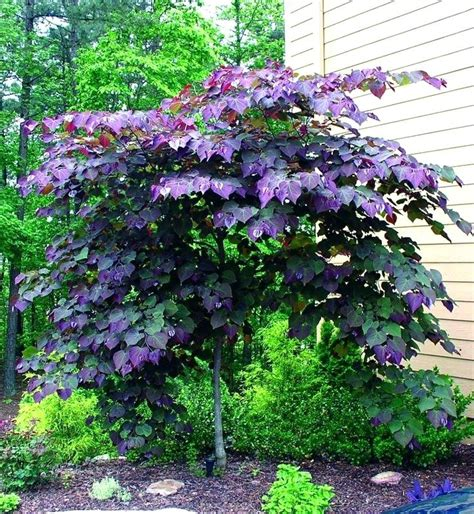 best trees for front yard best plants for front yard eatatjacknjills com