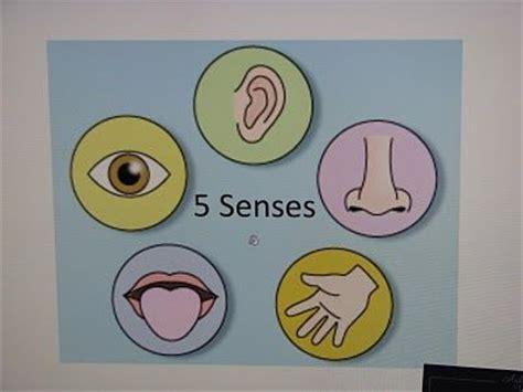 senses preschool activities 165 best 5 senses preschool theme images on 5