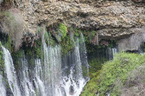 Mamma Quail Hiking California More Than Stop The