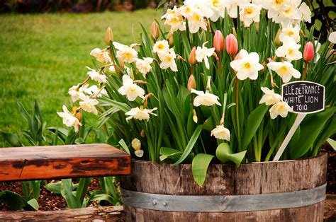 can you store bulbs in containers tips for storing
