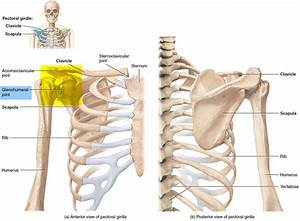 Broken Collarbone Or Clavicle Fracture Signs  Symptoms And