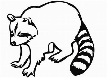 Raccoon Coloring Pages Ladybug