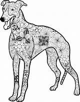 Greyhound Mandala Whippet Ausmalbilder Hunde Coloring Hund Ausmalen Ausdrucken Ausmalbild Dog Zum Mandalas Malen Von Einfach Clip Printable Mit Malvorlagen sketch template