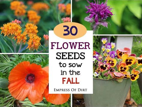 30 flower seeds to sow in the fall ebay
