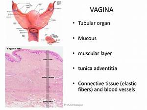 Female Reproductive System1 Copy