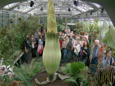 Kalthaus Botanischer Garten Basel by Der Titanwurz In Basel Bl 252 Ht T 228 Gliche Besichtigungen
