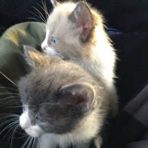 photos of cats meoww cats photo 34501235 fanpop