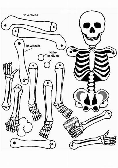 Anatomy Coloring Pages Anatomical Heart Human Skeleton