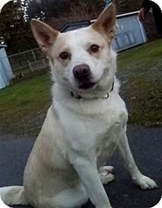 Ella | Adopted Dog | Victoria, BC | Husky/Australian ...