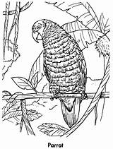 Coloring Parrot Pages Printable Parrots Awesome Animal Planet Animals Earth Birds Books Children Coloringpages101 Pengurus Adult sketch template