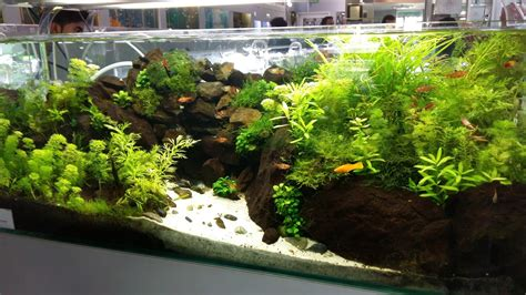 Aquascape Ideas by Kultur Flora Akuatik Field Trip To Aquascape Paradise
