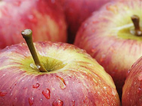 Sage Fruit Reports on Washington Apple Harvest ...