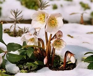 Welche Bäume Blühen Jetzt : search results for schne bilder guten morgen calendar 2015 ~ Buech-reservation.com Haus und Dekorationen