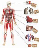 донорство костного мозга спб