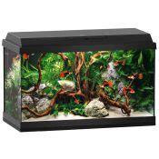 aquarium ab wann fische einsetzen 10 fische f 252 r kleine aquarien ab 60 litern mit