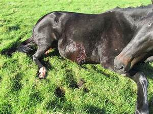 Horses Shot And Left For Dead On Cork   Limerick Border  U00b7 Thejournal Ie