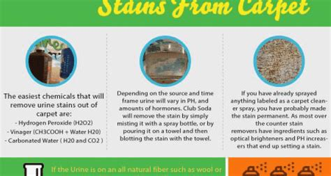 How To Remove Urine Stains From Upholstery by How To Remove Urine Stains From Carpet