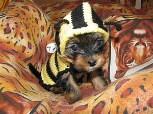 Dog sweater Bee dog jumper puppy sweater puppy jumper small