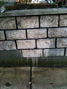 Nettoyer Mur Exterieur Noirci : nettoyage des murs exterieurs ~ Voncanada.com Idées de Décoration