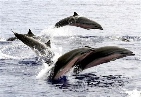 clymene dolphin ocean treasures memorial library