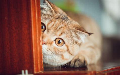 Cat Funny Hd Desktop Wallpapers 4k Hd