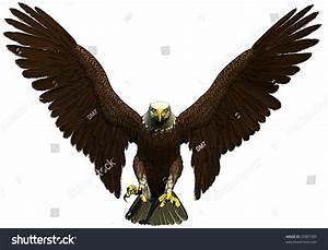 American Bald Eagle Flying Front Stock Illustration ...
