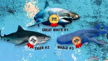 Shark Sharks Bites Vote Cbbc Voted Results