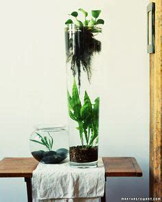 1000 ideas about indoor water garden on water