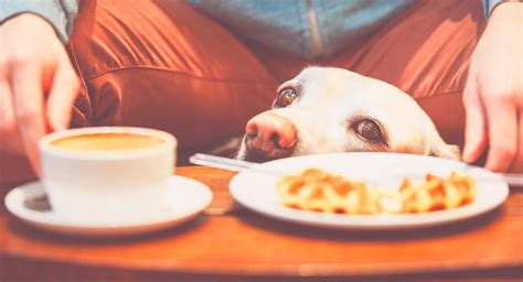 Coffee consumption can trigger a wide array of extremely serious consequences in canines. Can Dogs Drink Coffee Or Is It Dangerous To Share This Drink?