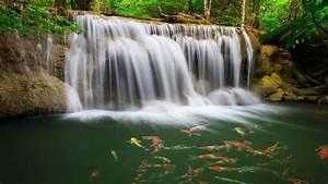 River, Waterfall, Coast, Colorful, Fish, Greens, Water, Tropical