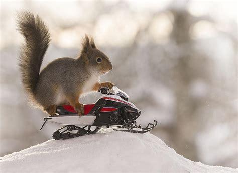 squirrels  ready   big winter games komo